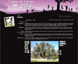 """L'olivier d'Oletta, et sa fiche descriptive sur le site """"Elisez l'arbre de l'année"""". (copie d'écran)"""